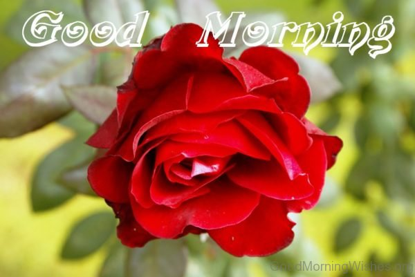 Good Morning With Red Flower