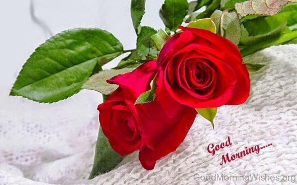Good Morning With Red Rose 1