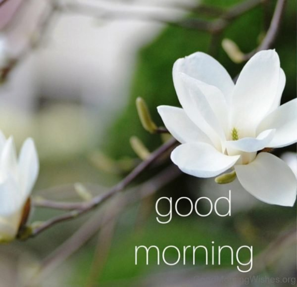 Good Morning With White Flower 1