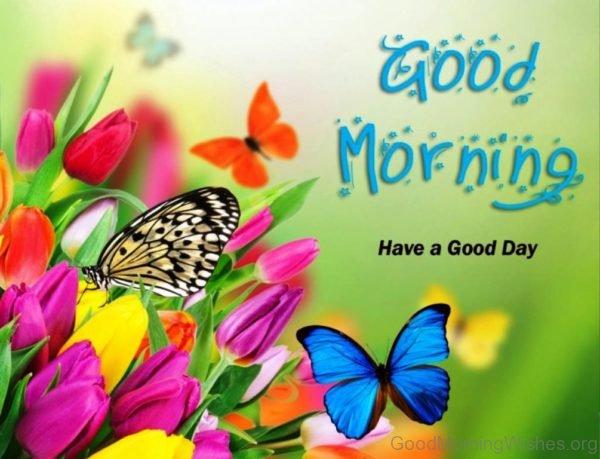 Lovely Good Morning Pic 4