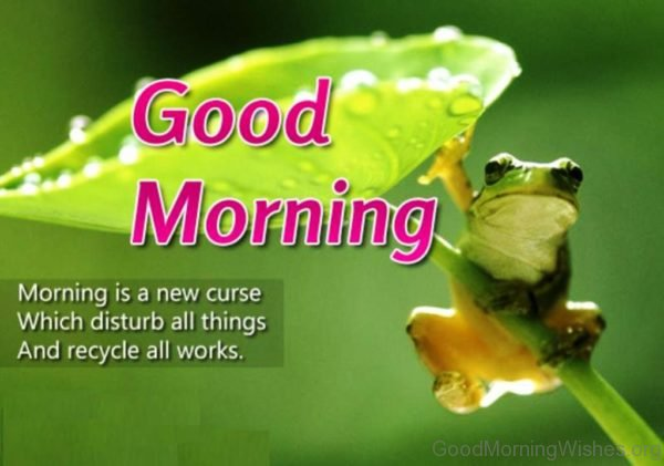 Morning Is A New Curse Which Disturb All Things