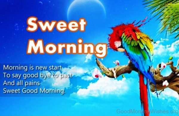Morning Is New Start To Say Good Bye To Past And All Pains Sweet Good Morning