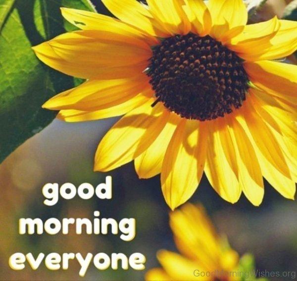 Nice Good Morning Everyone Pic