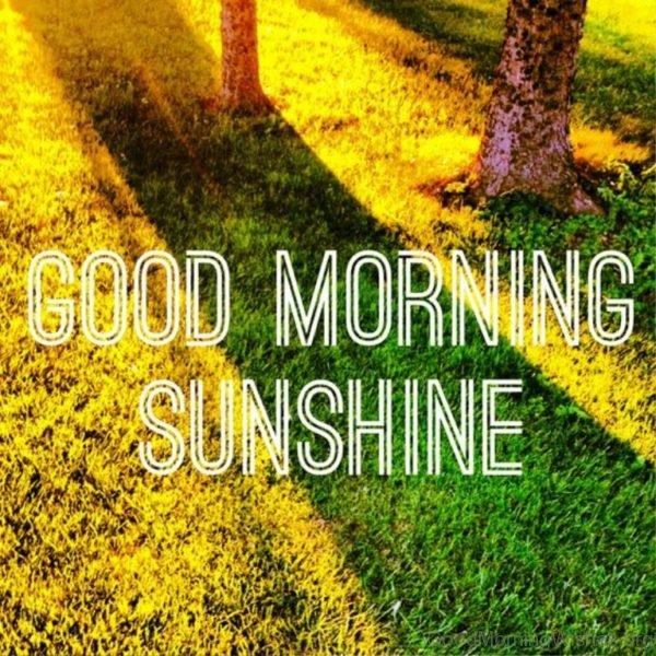 Nice Good Morning Pic 2
