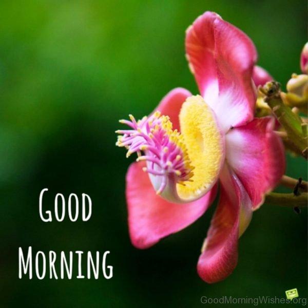 Stunning Good Morning Photo