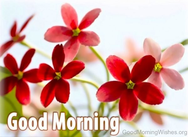 Stunning Pic Of Good Morning 5