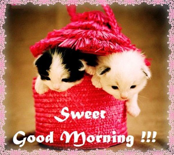 Sweet Good Morning Pic 1