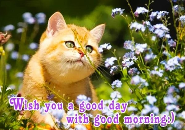 Wish You A Good Day With Good Morning