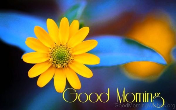 162 lovely good morning wishes with flowers yellow flower good morning image mightylinksfo
