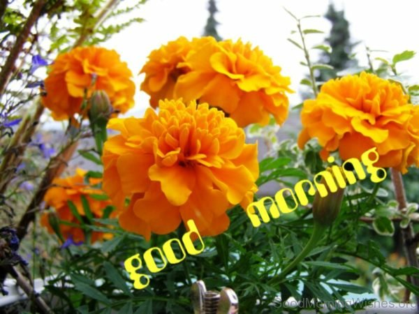162 lovely good morning wishes with flowers yellow flowers good morning pic mightylinksfo