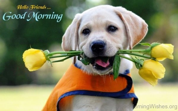 Adorable Good Morning Puppy Pic