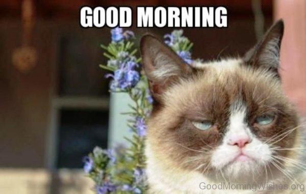 Amazing Good Morning Cat