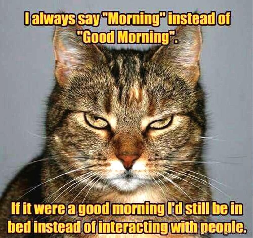 73 Good Morning Wishes for Cat Lovers