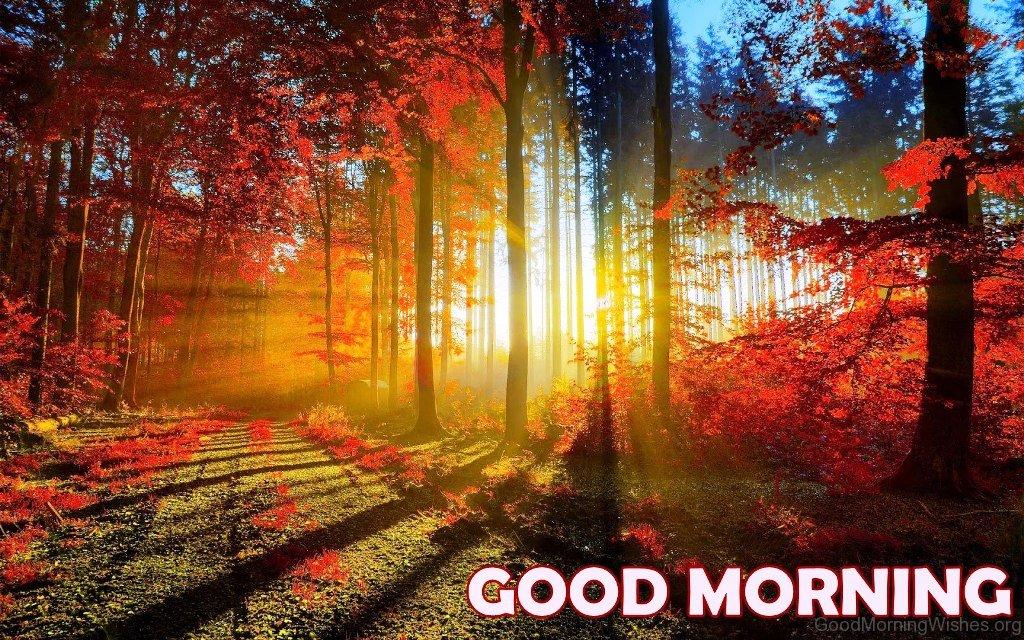 Good Morning Nature Image : Good morning nature