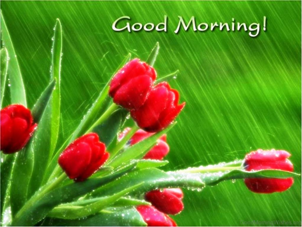 16 good morning wishes for a rainy day beautiful pic of good morning 14 m4hsunfo