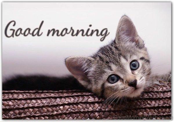 Beautiful Pic Of Good Morning Cat
