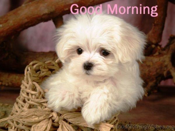 Cool Good Morning Pic 2