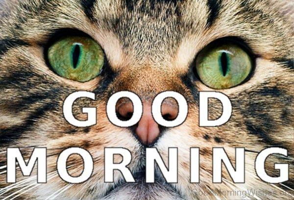 Cool Good Morning Pic