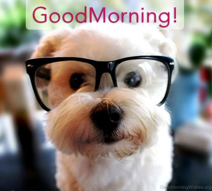57 good morning wishes for puppy lovers