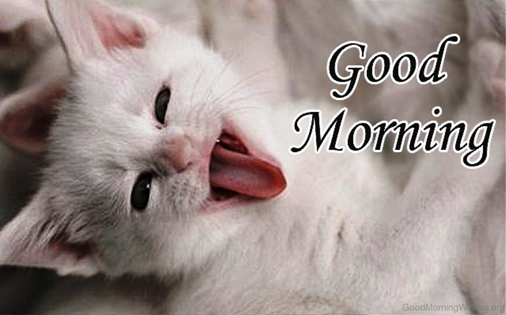 Good Morning Cute : Good morning wishes for cat lovers