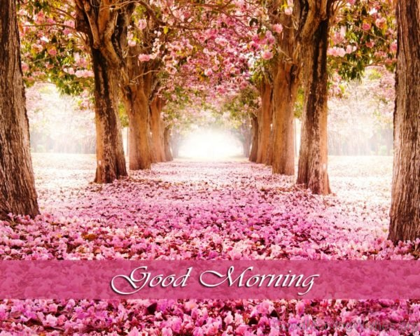 Elegant Pic Of Good Morning
