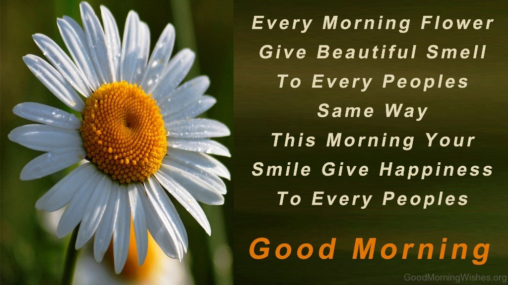 Good Morning Wishes With Beautiful Flowers Images : Good morning wishes with thoughts