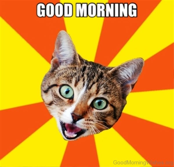 Funny Pic Of Good Morning Cat