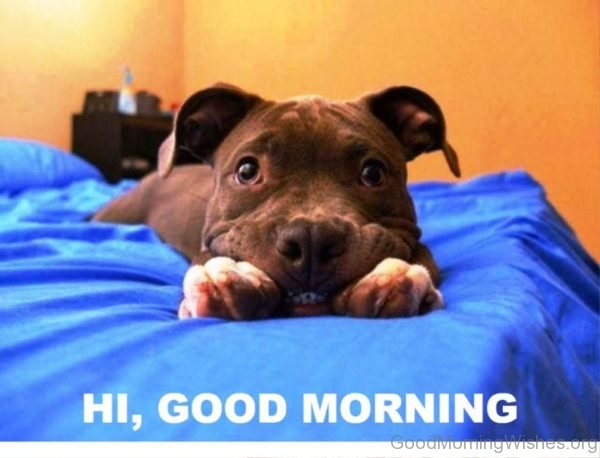 Funny Pic Of Good Morning Puppy