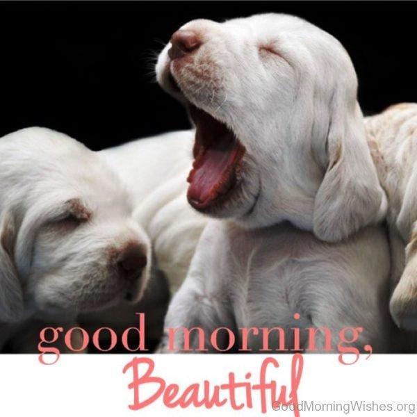 Good Morning Beautiful 1