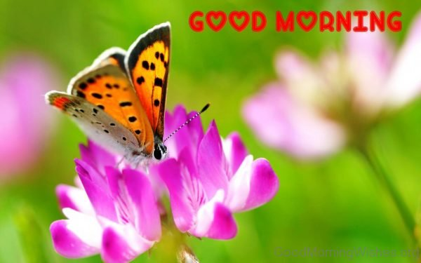 Good Morning Butterfly And Flower Image