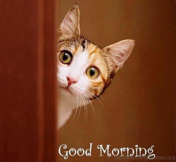 Good Morning Cat Photo