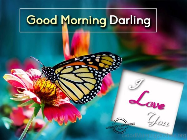 Good Morning Darling Image
