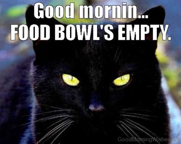 Good Morning Food Bowls Empty