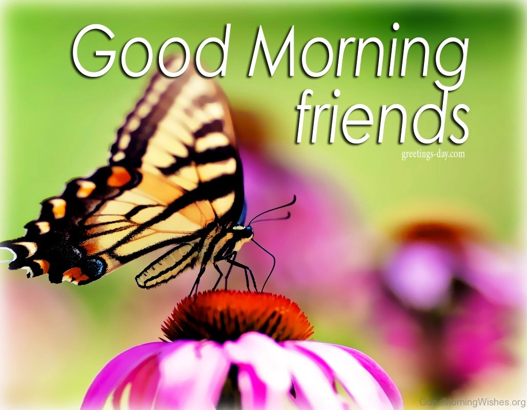 28 Good Morning With Butterfly Quotes