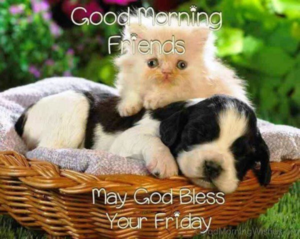Good Morning Friends May God Bless Your Friday