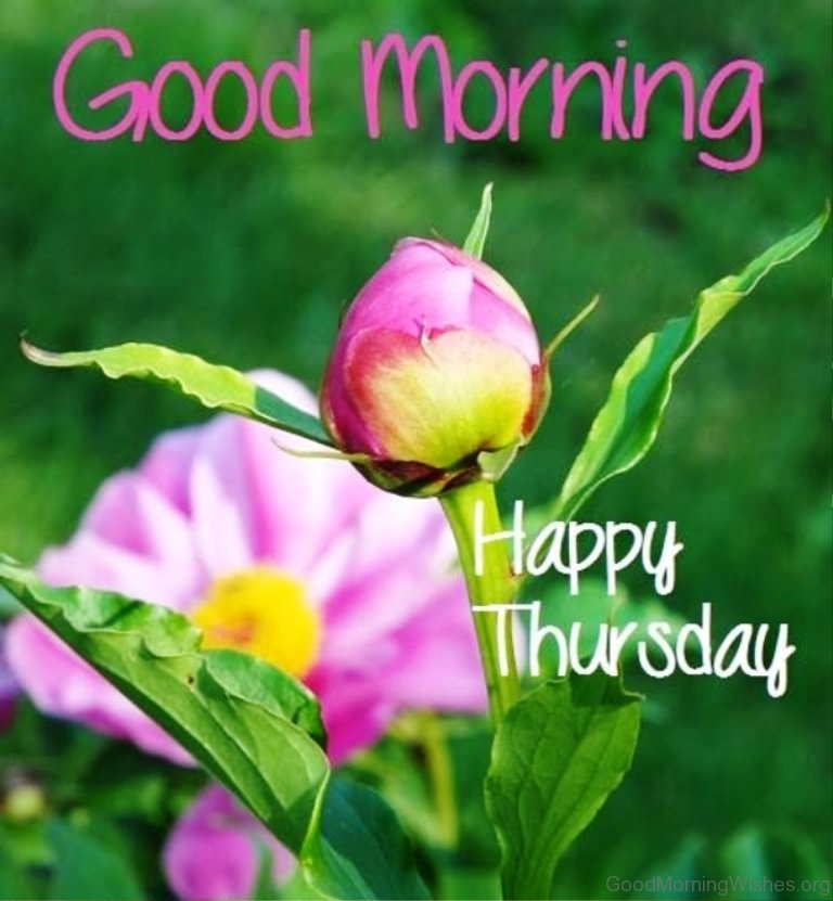 Best Thursday Wishes Quote: 38 Good Morning Wishes On Thursday