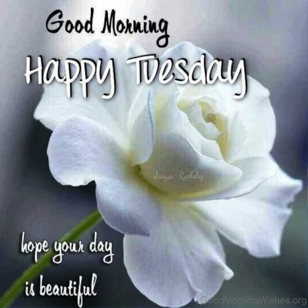 Good Morning Happy Tuesday Hope Your Day Is Beautiful