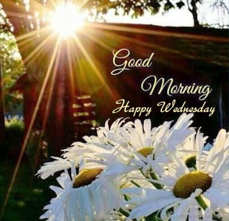 Good Morning Happy Wednesday : Good morning wishes on wednesday