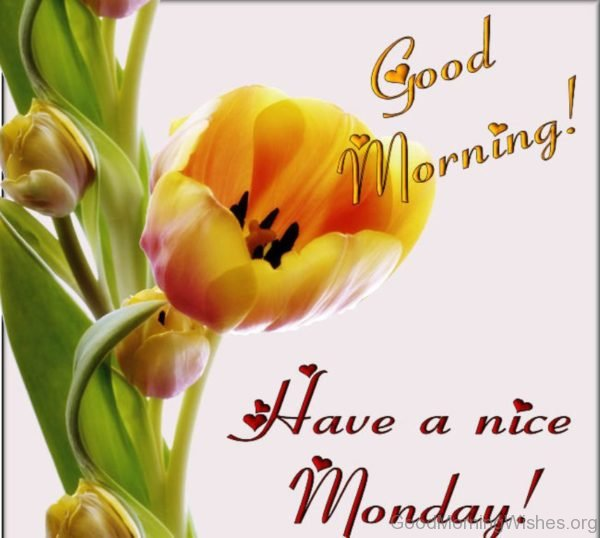 Good Morning Have A Nice Monday