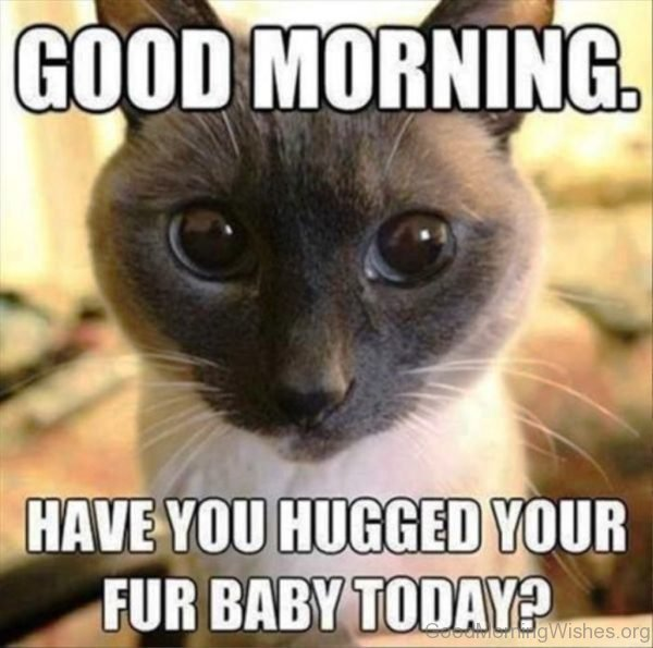 Good Morning Have You Hugged Your Fur Baby Today