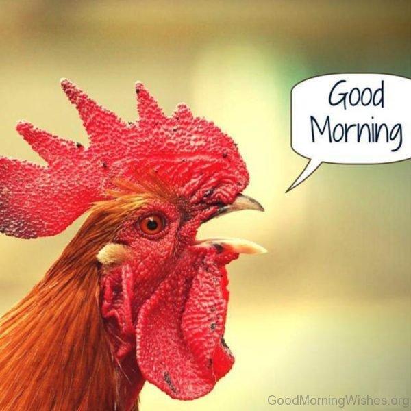 Good Morning Image 16