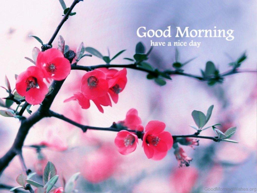 81 Good Morning