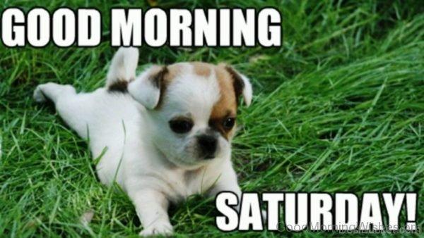 Good Morning Saturday Pic