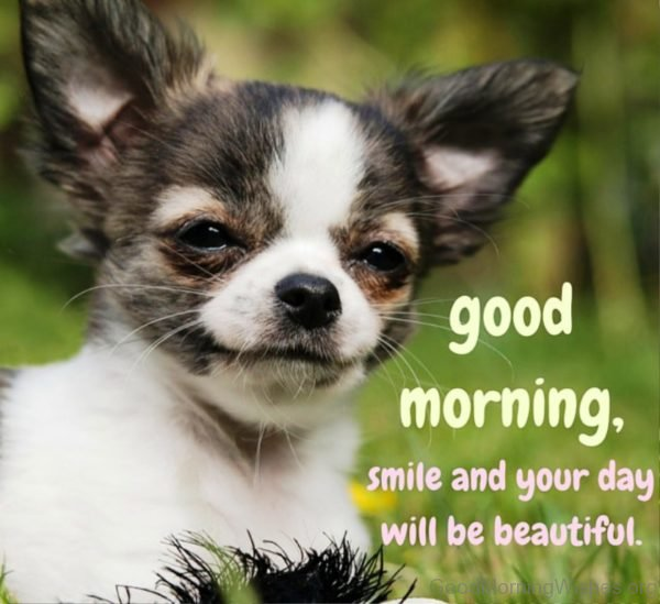 Good Morning Smile And Your Day Will Be Beautiful