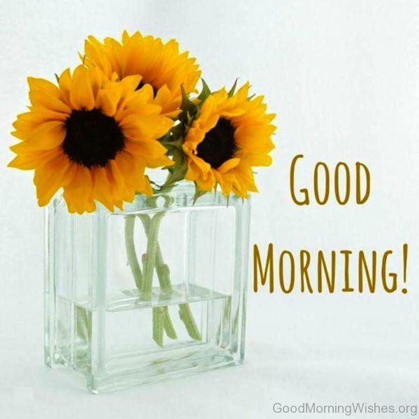 Good Morning Sunflowers Photo