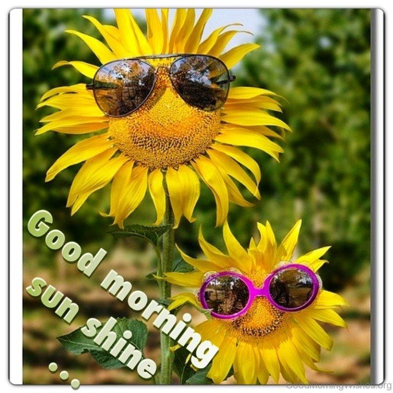Good Morning Sunshine Wishes : Sunflower good morning wishes