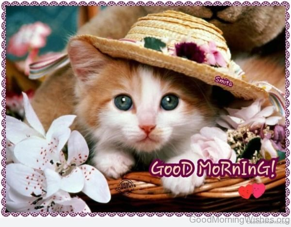Good Morning With Cute Cat