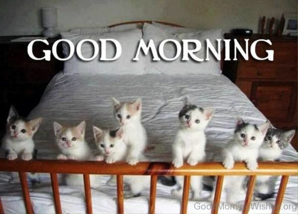 Good Morning With Cute Cat Image