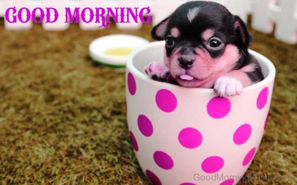Good Morning With Cute Little Puppy