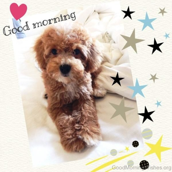 Good Morning With Cute Puppy